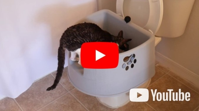 Kitty LitterBowl YouTube Video